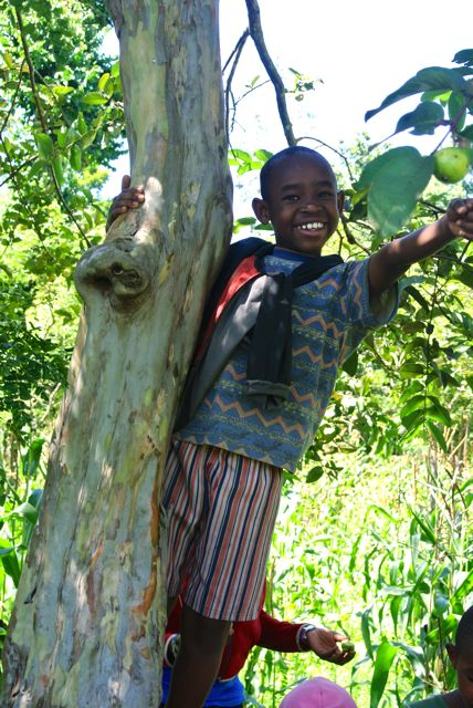 Omari climbing up a pear tree.