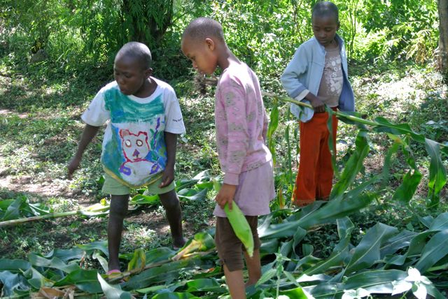 Ayubu, Anedi and Maria getting maize to bring back to the center.