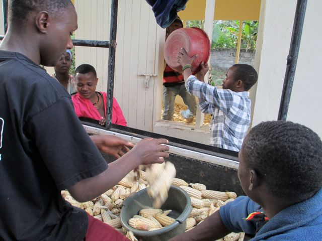 Students and teachers working together to unload the maize.